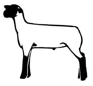 300x276 Club Show Lambs Clipart Res Div @ Mont. (Coming Soon!) Animals