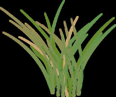 400x333 Drawn Grass Marsh Grass