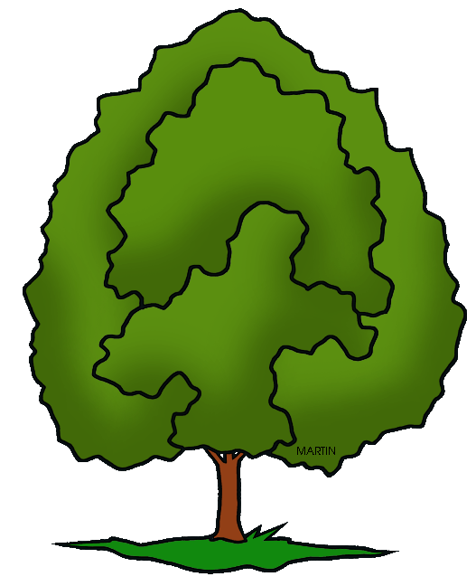 527x648 United States Clip Art by Phillip Martin, State Tree of Maryland