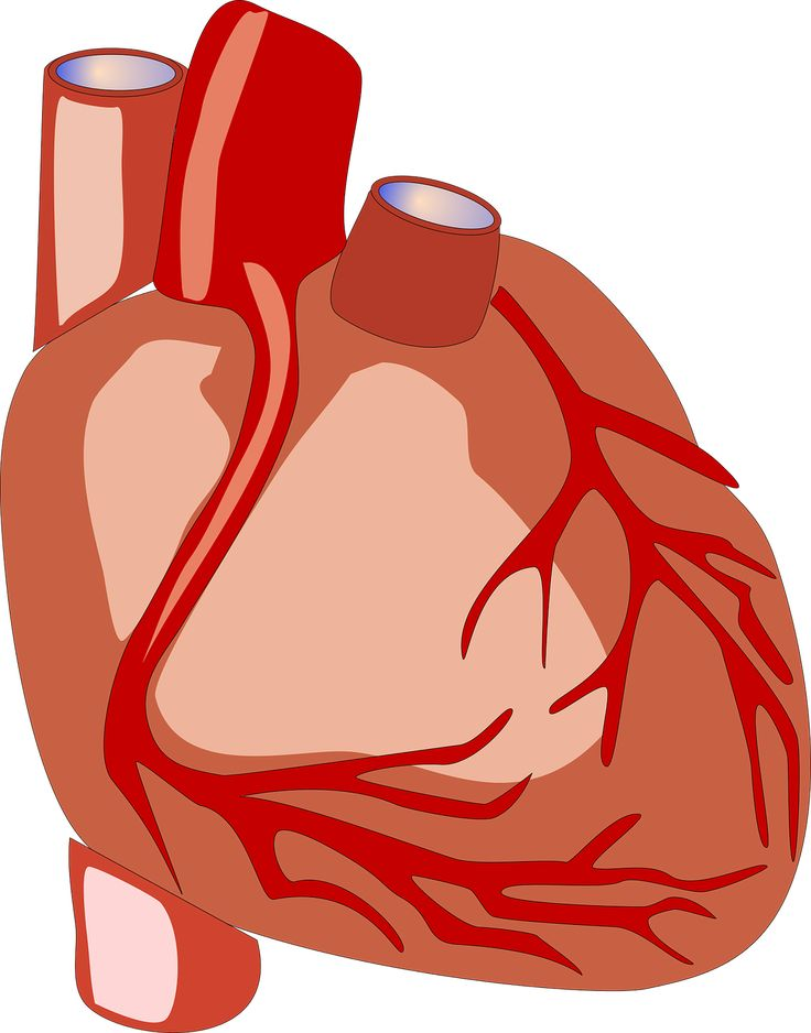 Medical Heart Clipart