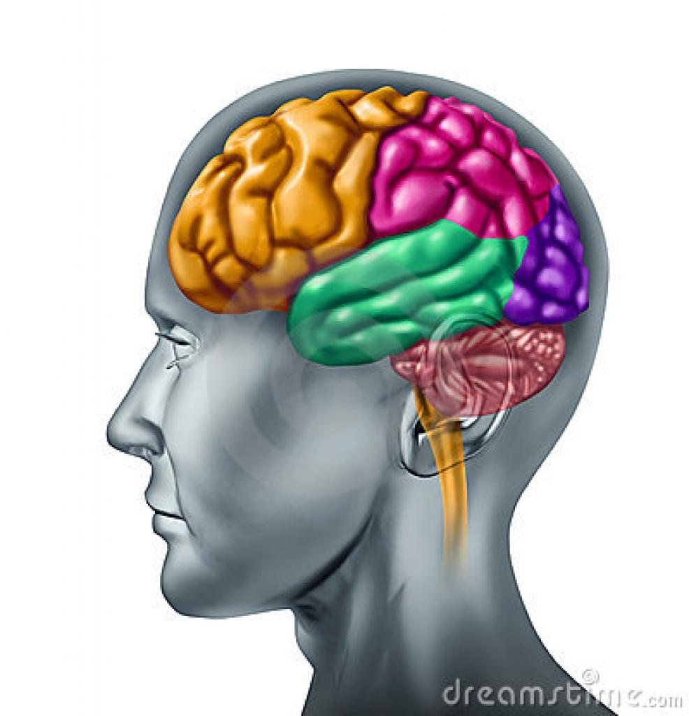 986x1024 Brain Memory Clipart Brain Memory Clipart Memory Clip Art Free