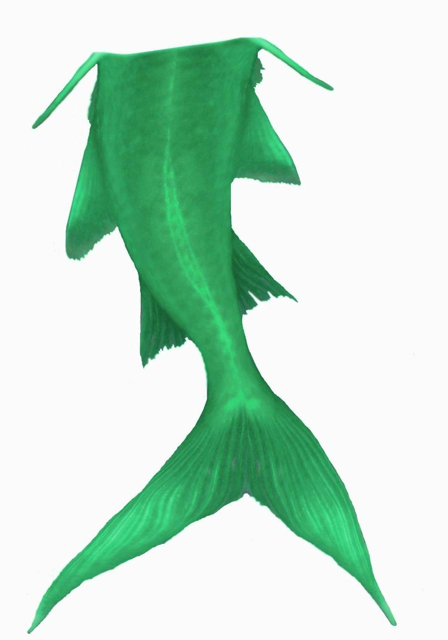 900x1284 Top Mermaid Tail Clipart Green By Hasureborn Drawing