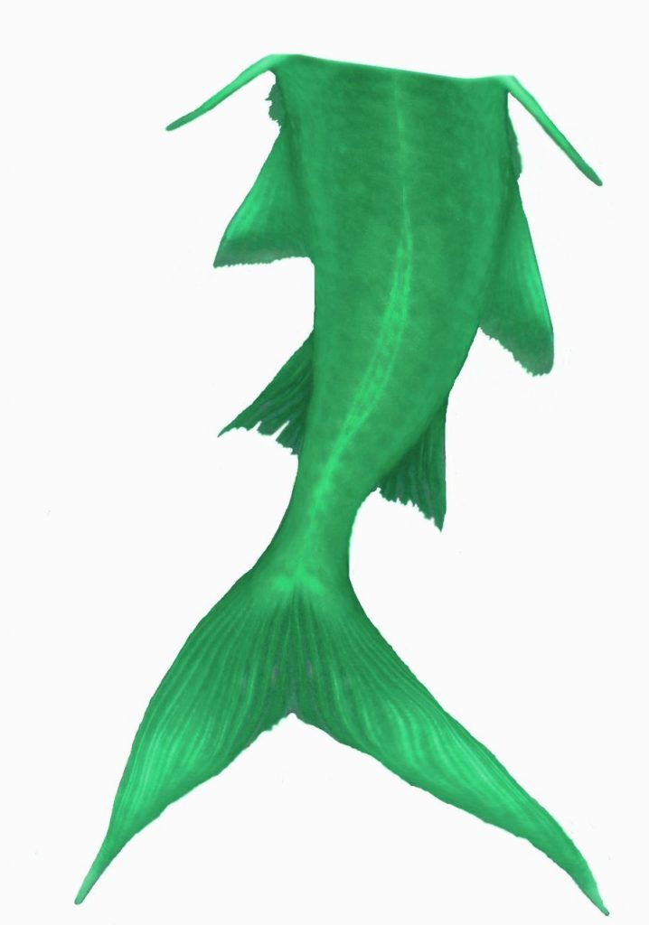 718x1024 Appealing Mermaid Tail Clipart Panda Free Images