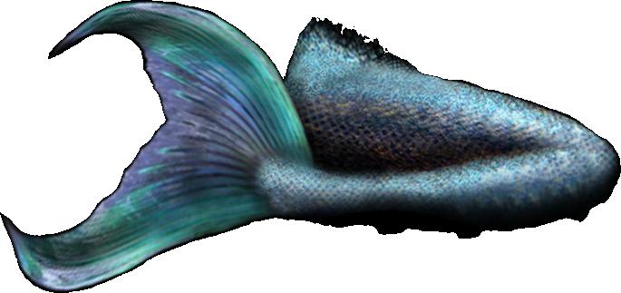 685x323 Mermaid Tail 2 (Psd) Officialpsds