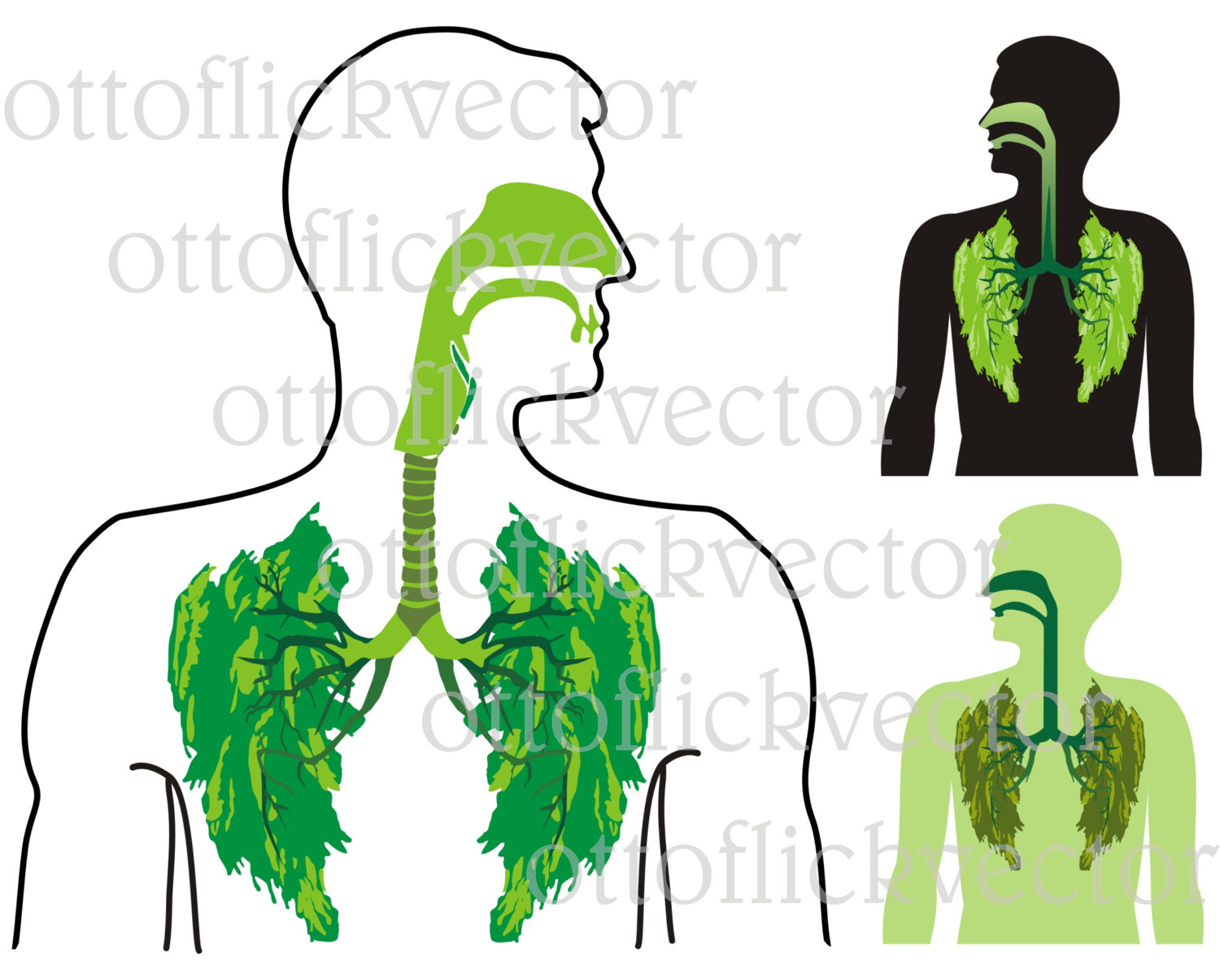 1500x1205 Green Lung Clipart, Anatomy, Human Organ, Medical, Environmental