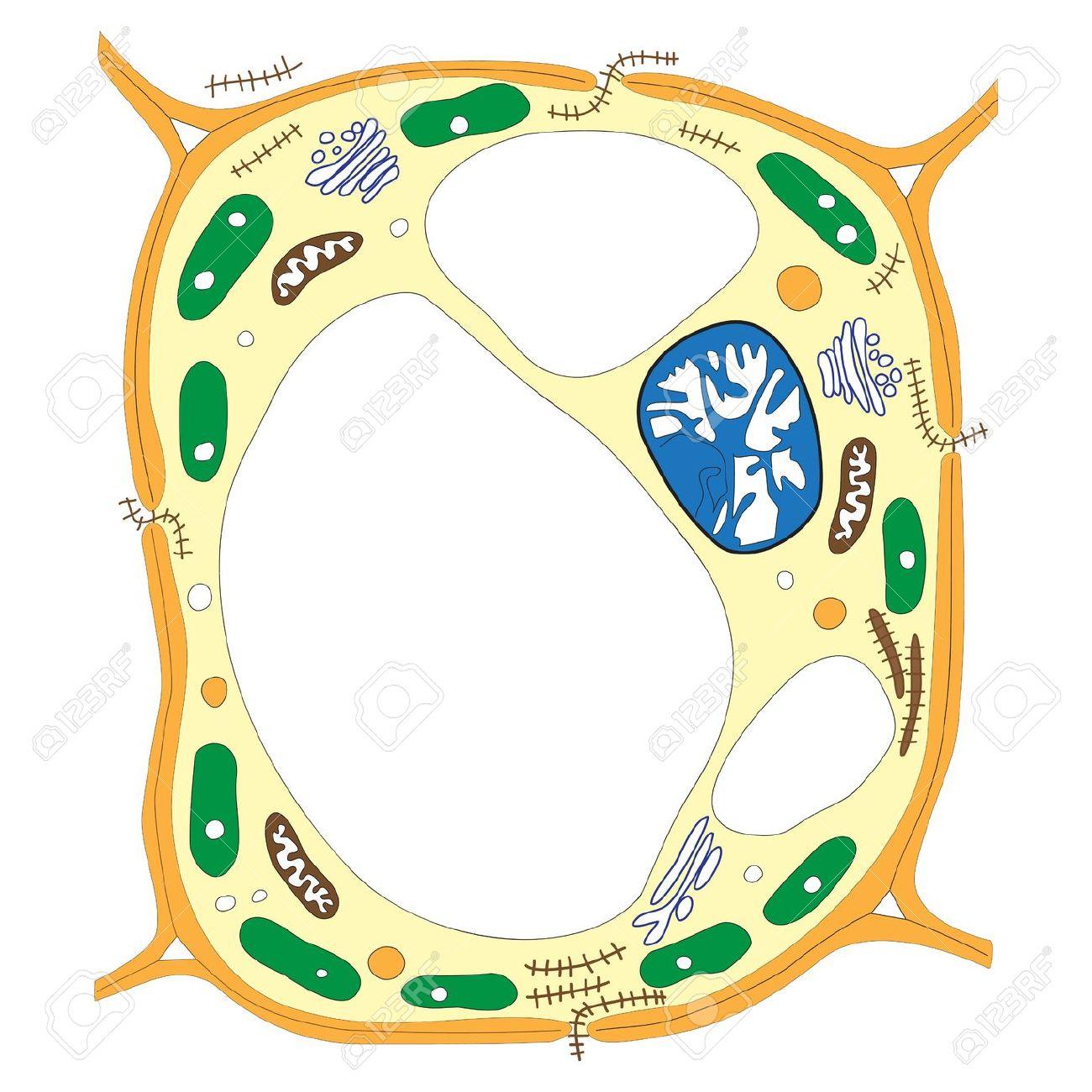 1300x1300 Biology Cells Clip Art Cliparts