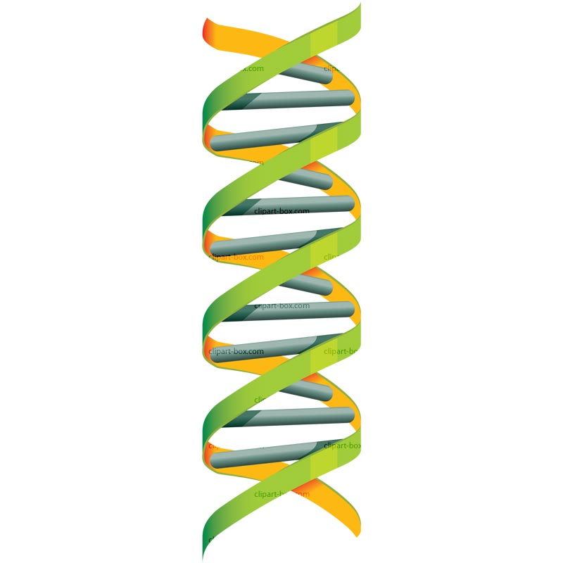800x800 Clipart For Dna