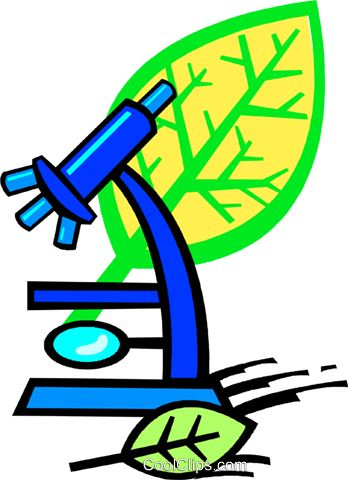 348x480 42 Best Gr2 Patterns (Biology) Images Biology, Art