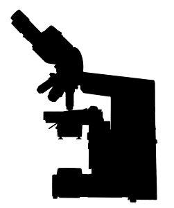 251x300 Optical Microscope Photographs Fine Art America