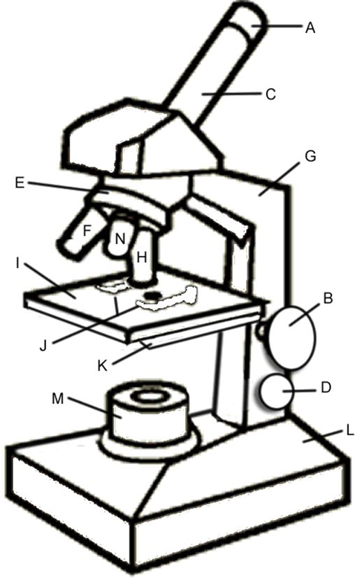 Microscope Diagram For Kids