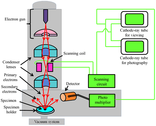 Microscope Diagram For Kids Free Download Best Microscope Diagram