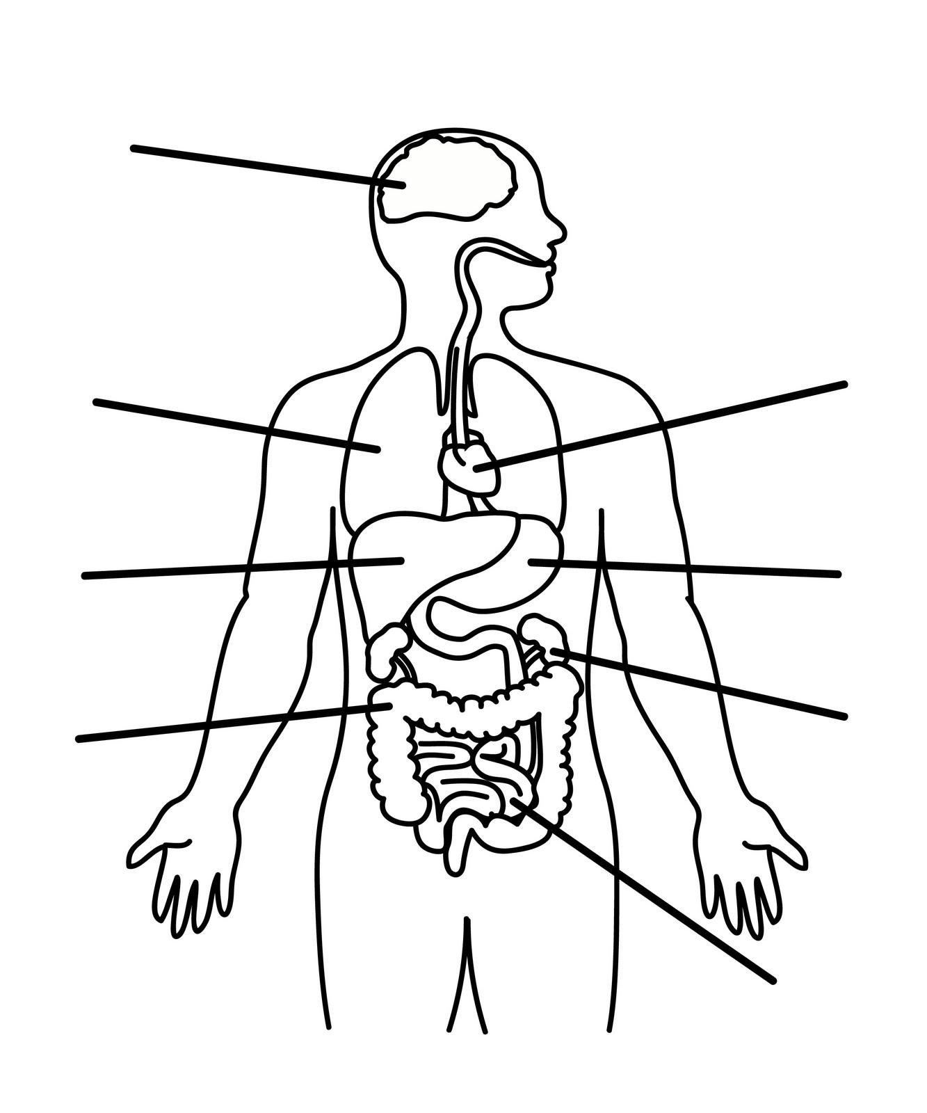 1333x1600 Human Body Anatomy Outline Printable For Kids Montessori Science
