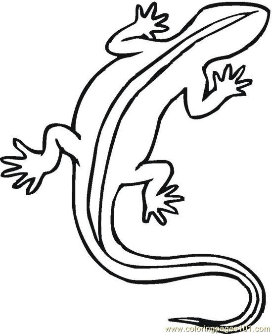 550x674 Pin Reptiles Coloring Pictures School Projects