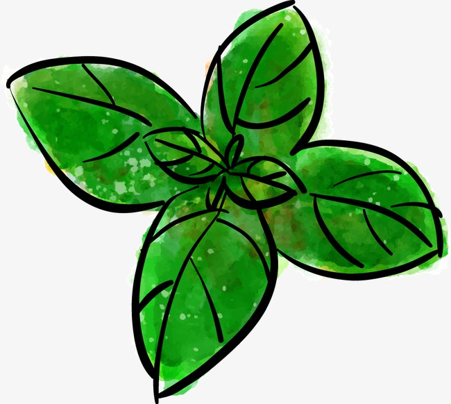 650x582 Drawing Vector Mint Leaves, Watercolor, Vector, Mint Leaf Png
