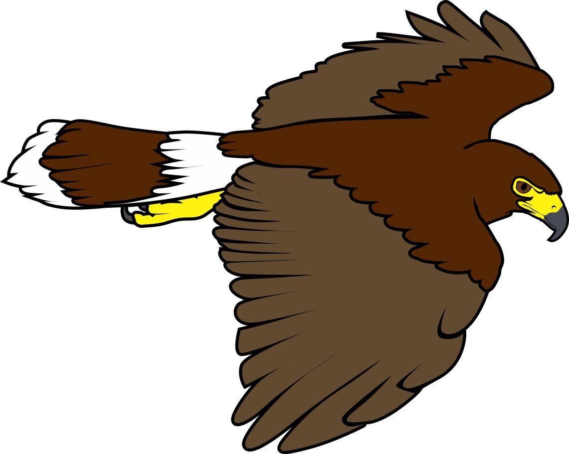 1141x911 Harris Hawk Clipart