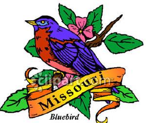 300x254 Bluebird, The State Bird Of Missouri