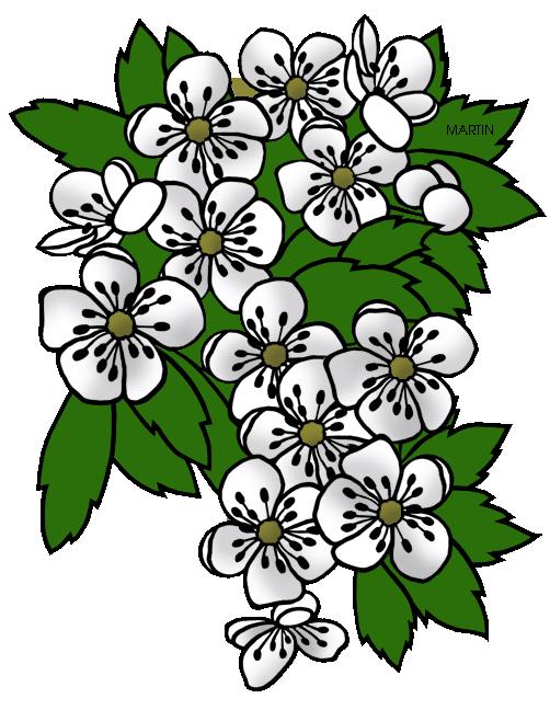 502x648 United States Clip Art By Phillip Martin, Missouri State Flower