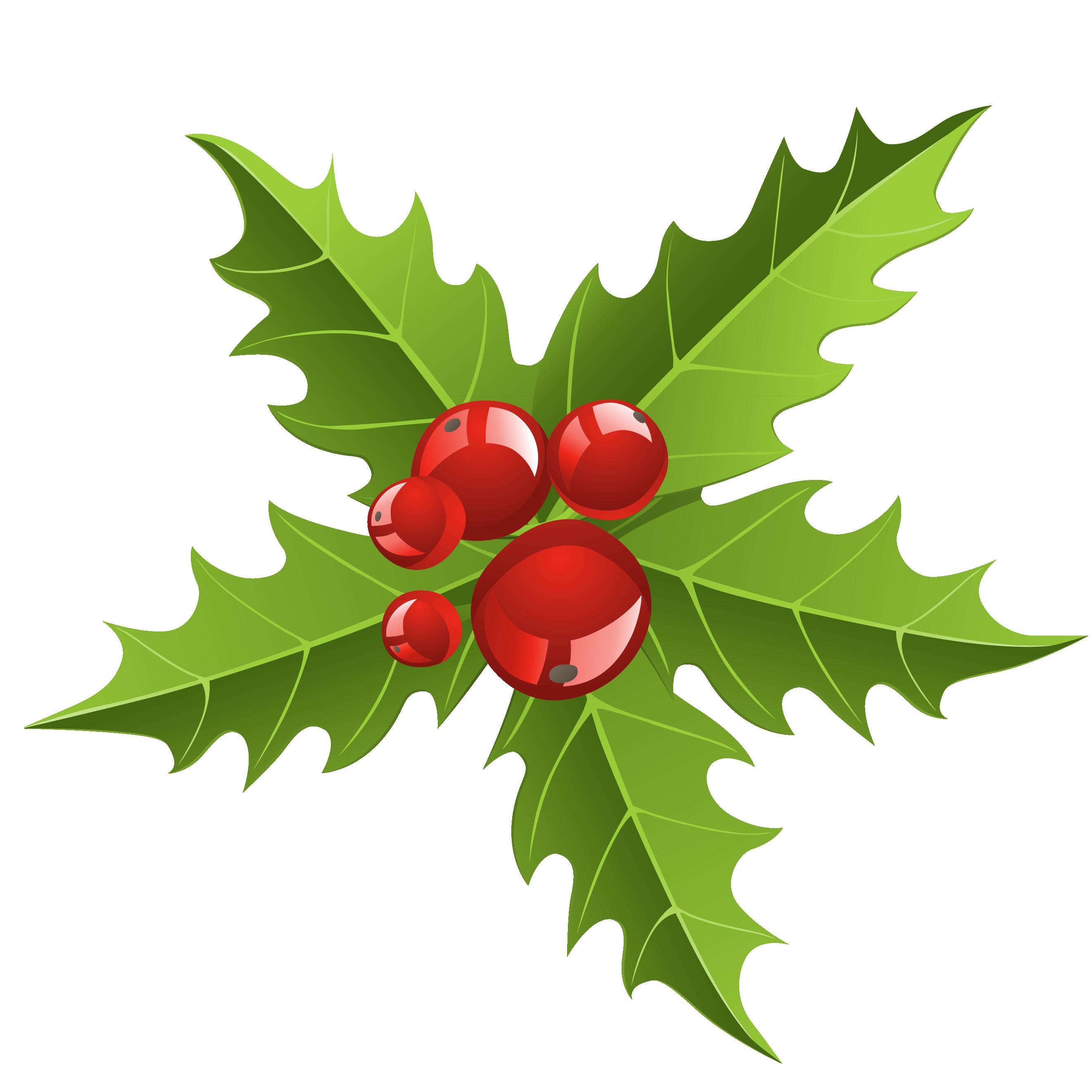 2644x2644 Mistletoe Clip Art 2