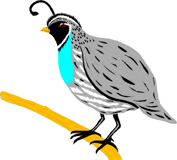600x544 Mockingbird Clipart Hostted 3