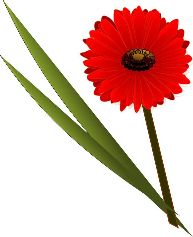 651x800 Gerbera Clipart Modern Flower