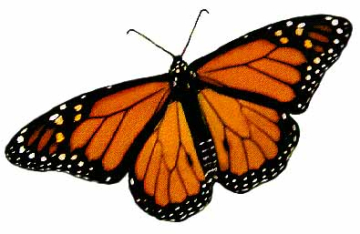 395x257 Male Amp Female Monarch Butterfly Illustrations