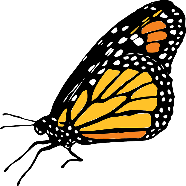 640x638 Monarch Butterfly Clipart