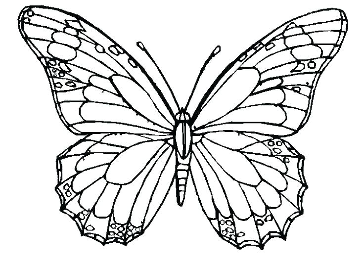 736x536 Monarch Butterfly Coloring Pages Free Art Thaypiniphone