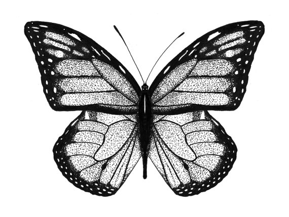 570x428 Monarch Butterfly Drawing