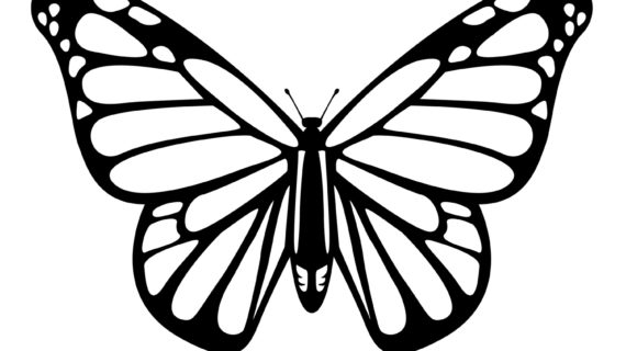 570x320 Monarch Butterfly Line Drawing Flying Monarch Butterfly Tattoo
