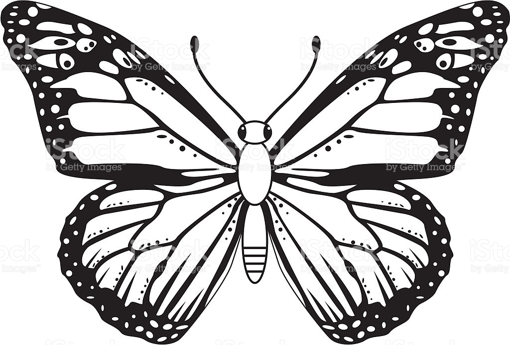 1024x694 Monarch Butterfly Clipart Black And White