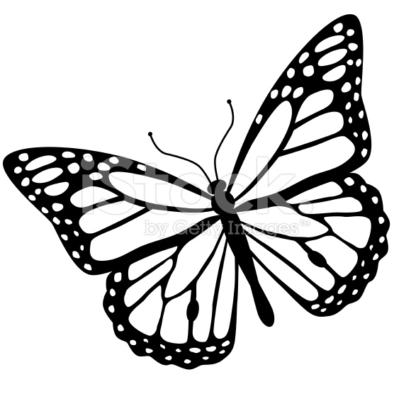 556x556 Monarch Butterfly Clipart Vector Side