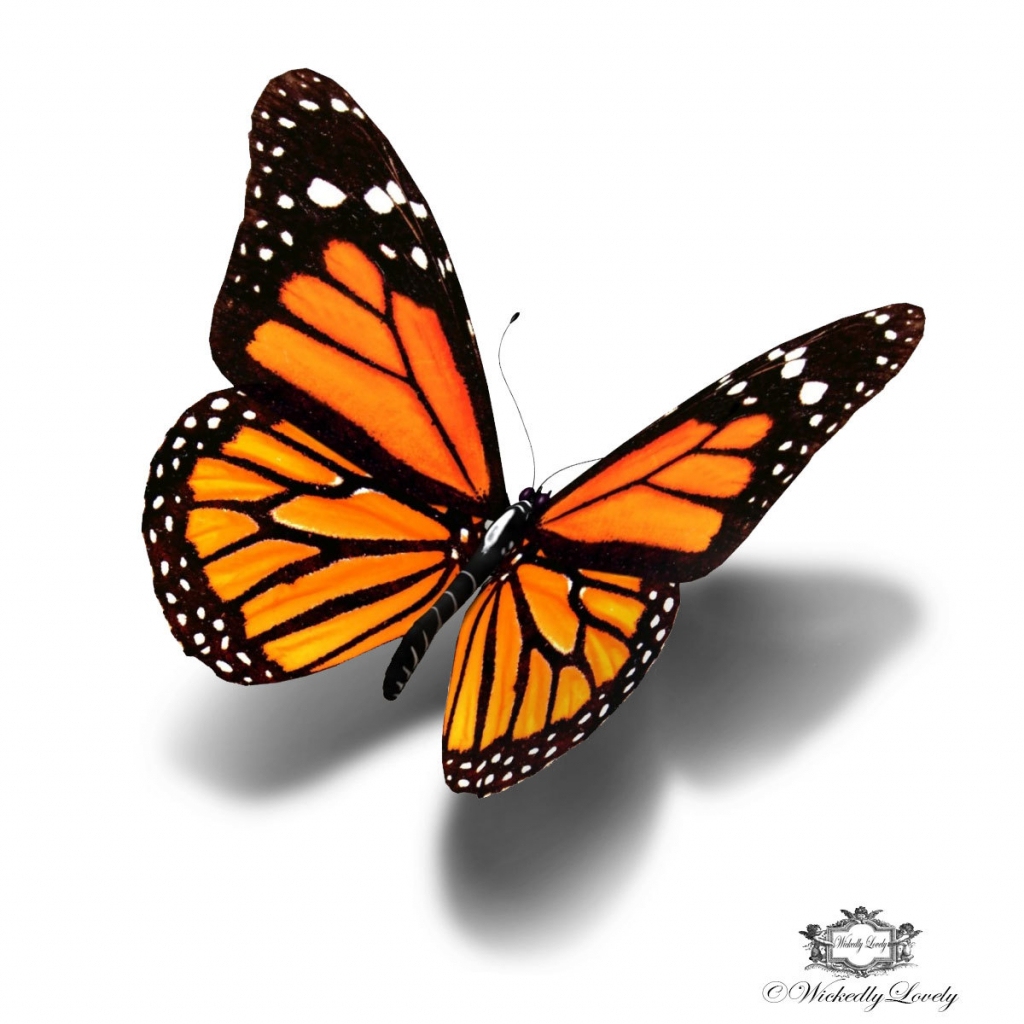 1024x1024 3d butterfly drawing monarch butterfly 3d butterfly tattoo