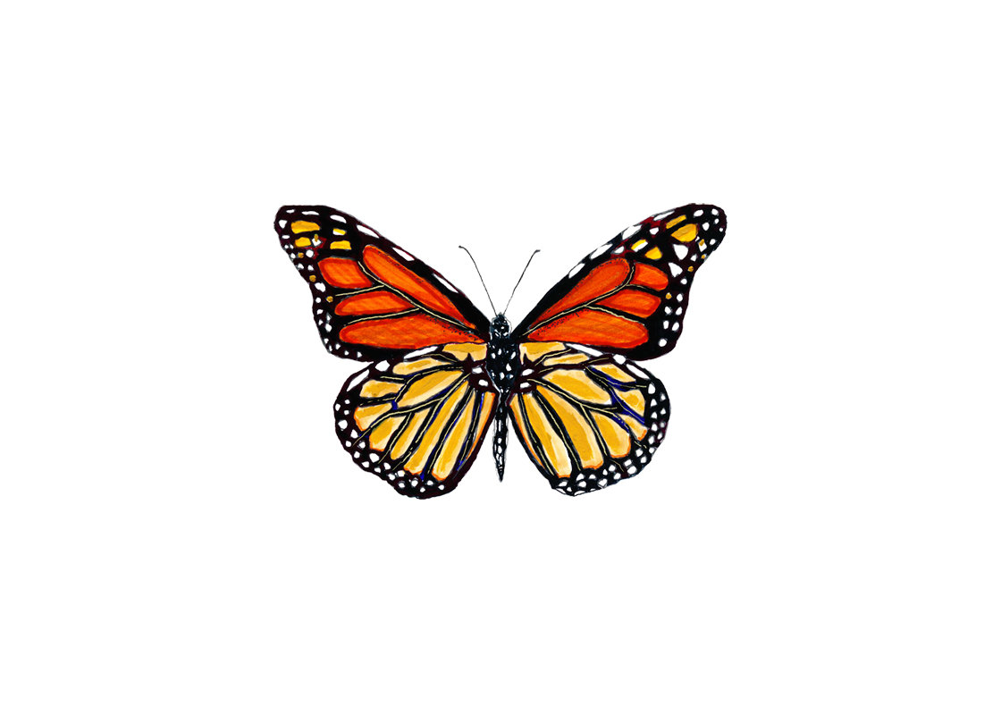 1120x800 Monarch Butterfly Drawings Clipart Image