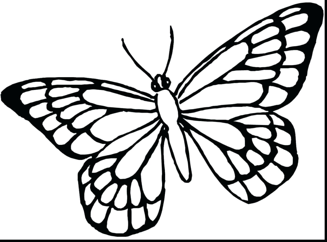 1392x1031 Outline Only Monarch Butterfly Mask Template Tattoo Coloring