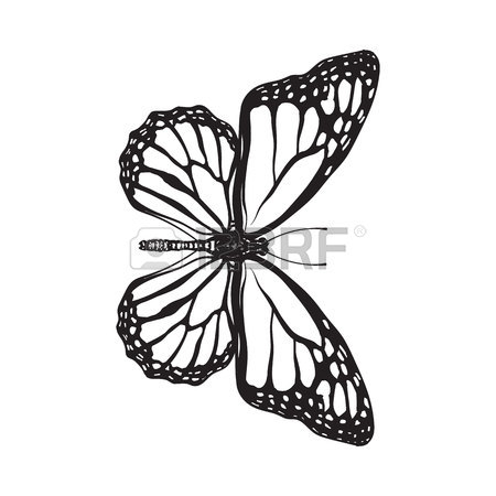450x450 Top View Of Beautiful Monarch Butterfly, Sketch Illustration