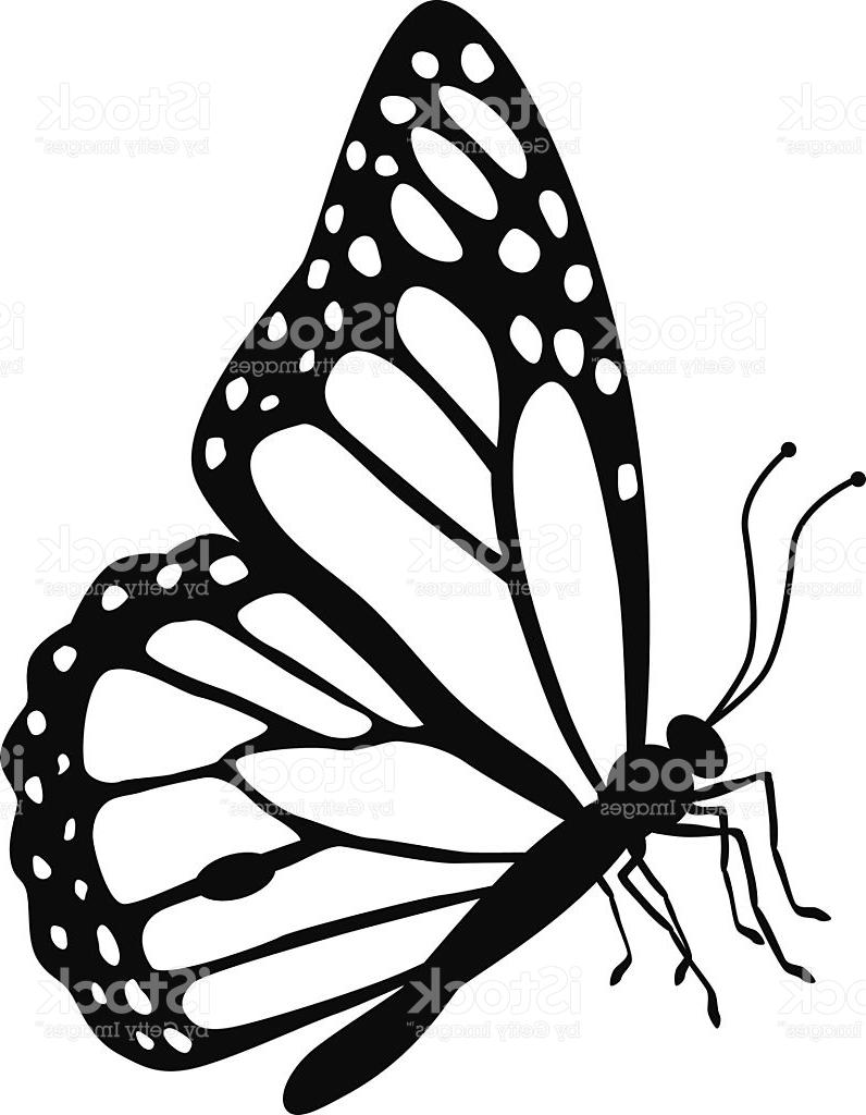 796x1024 Unique Monarch Butterfly Side View In Black And White Vector Photos