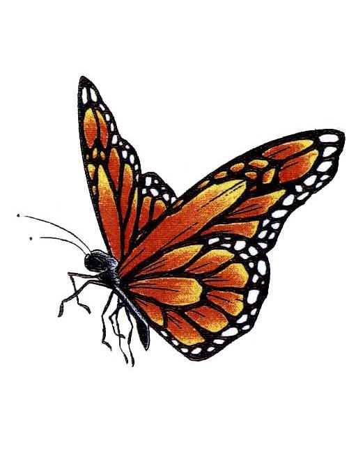 501x649 Monarch Butterfly Tattoos Ideas