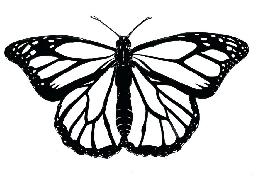 863x615 Monarch Butterfly Edited Coloring Template Flying Outline