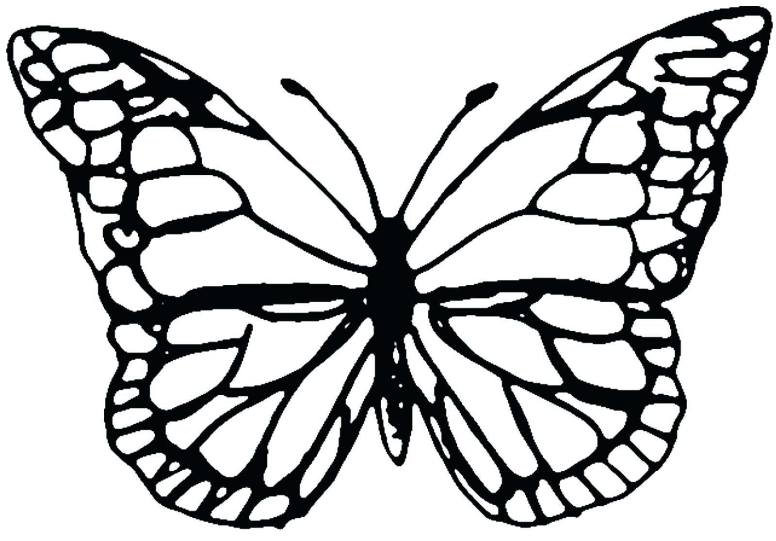 1600x1117 Monarch Butterfly Outline 134 Astonishing Patterns Printable Free