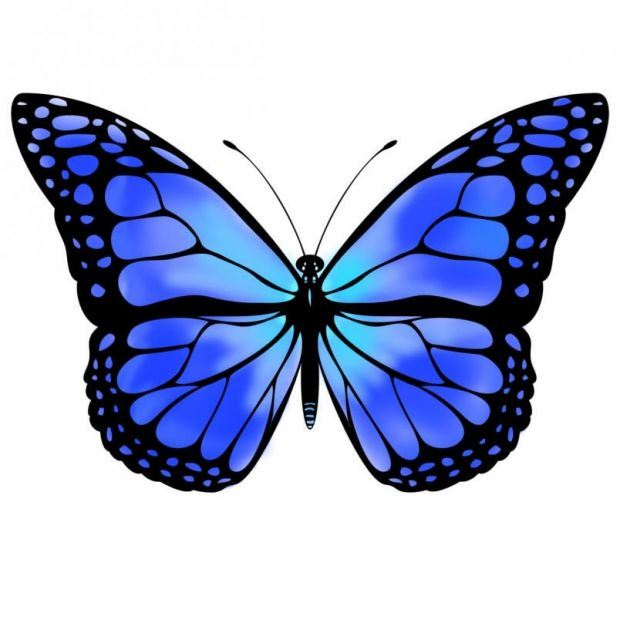 620x620 Monarch Butterfly Clipart One