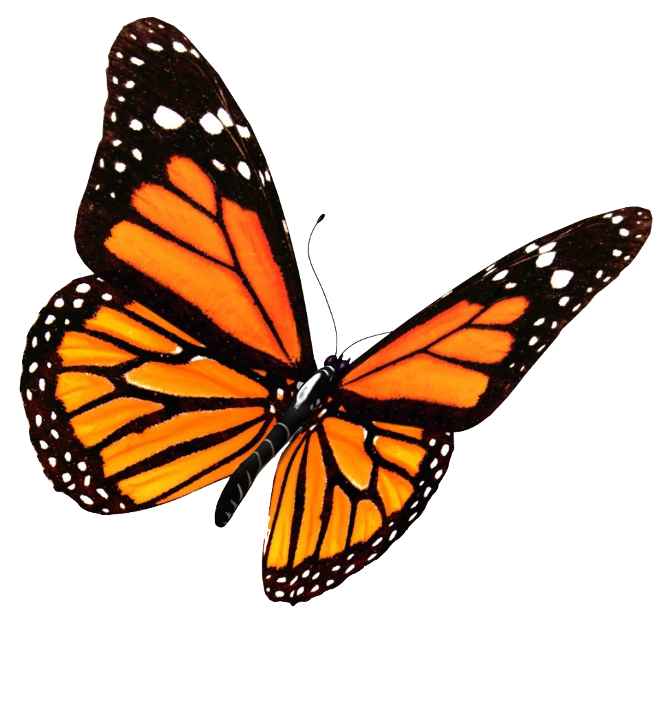 969x1024 Monarch Butterfly Clipart Transparent Background