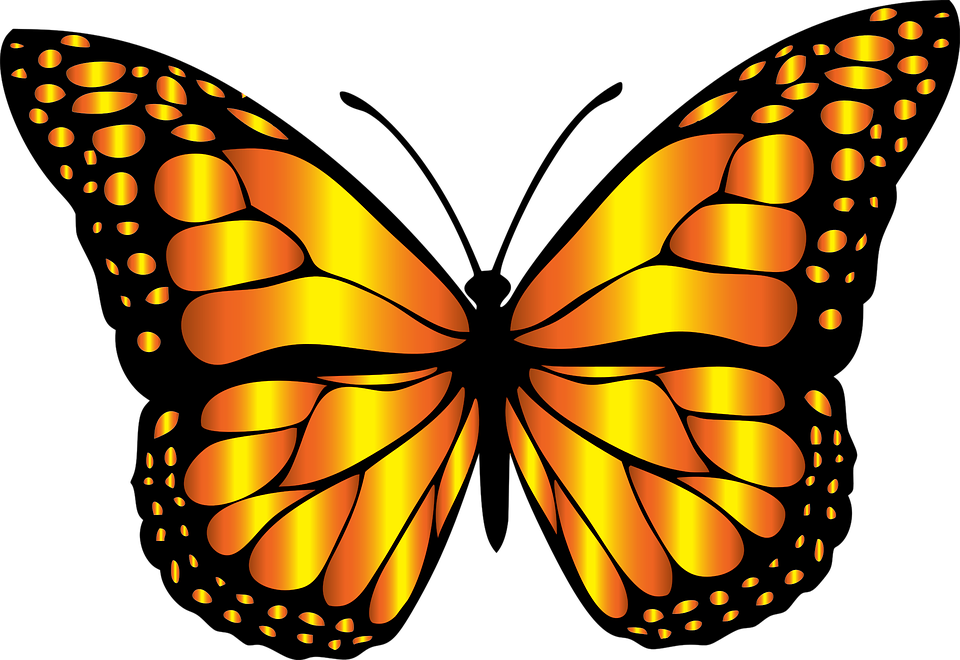 960x660 Monarch Butterfly Clipart