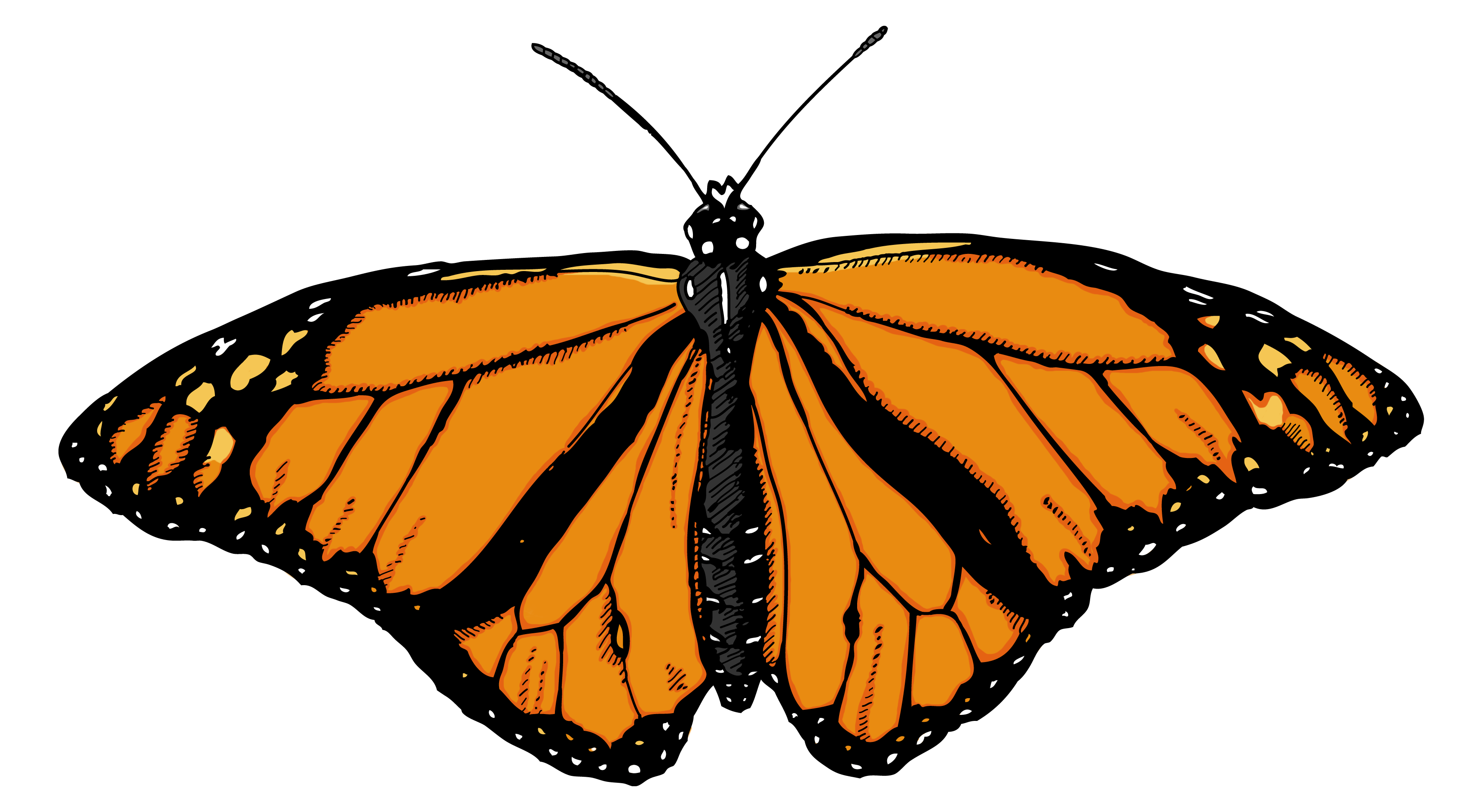 3450x1890 Monarch Butterfly Clipart 3