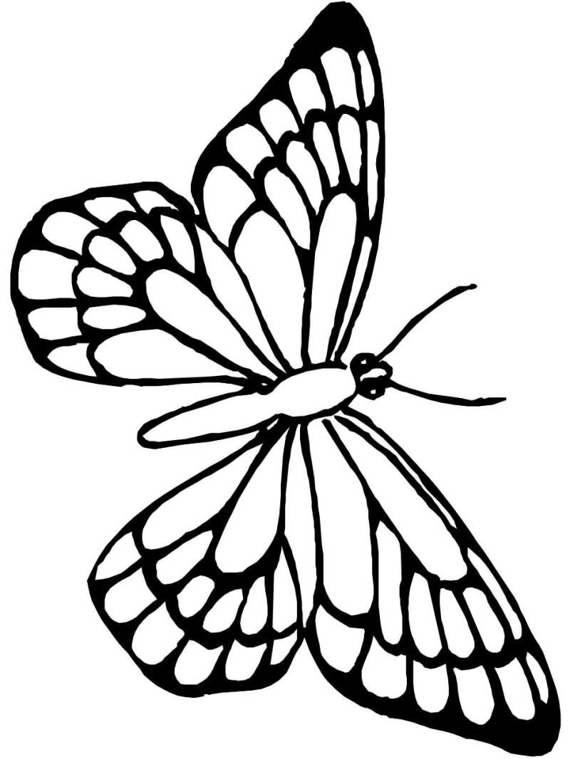 800x1066 Animal Butterfly Outline Printable Sheets With Butterflies