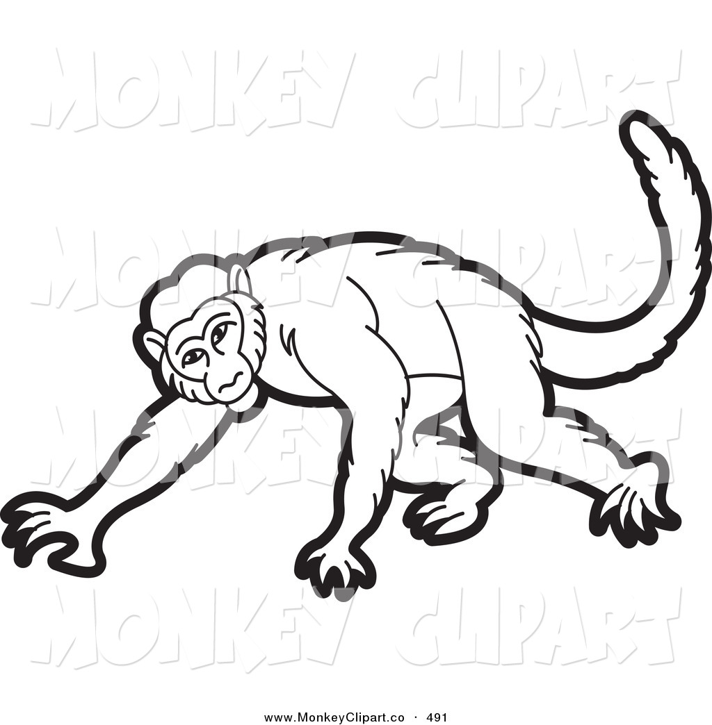 1024x1044 Monkey Black And White Clipart