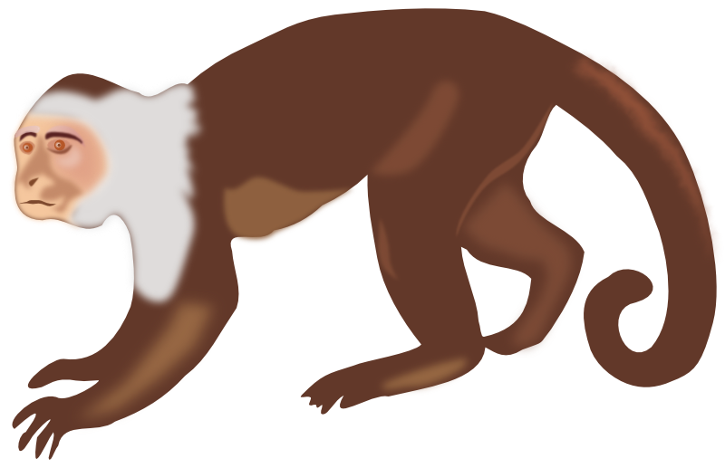 800x517 Monkey clipart monkey animal clip art monkey photo