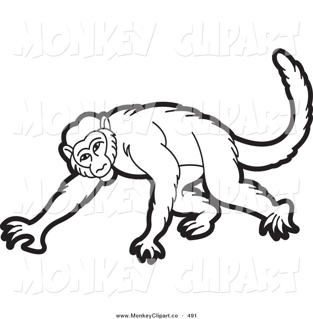 1024x1044 Spider Monkey Clipart Drawn