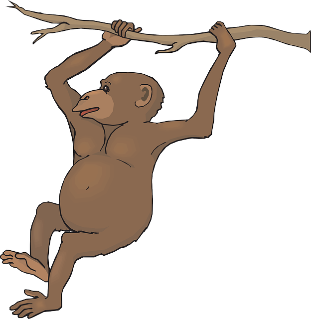 624x640 Free Swinging Monkey Clip Art