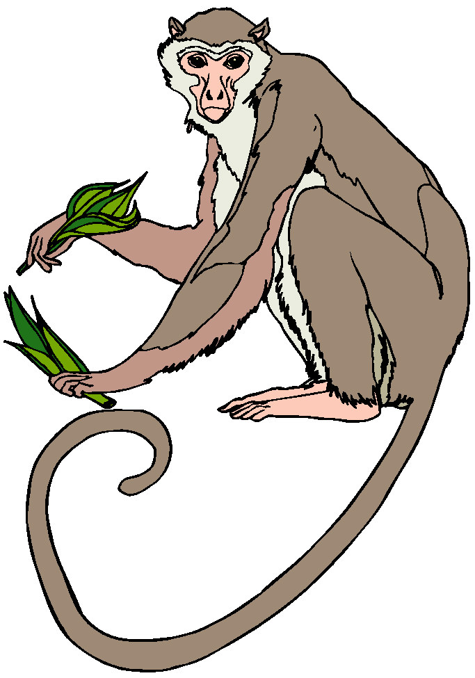 683x975 Monkey Clip Art Pictures Free Clipart Images 2