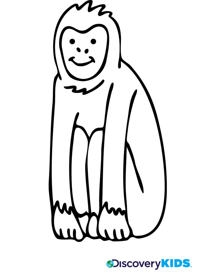 660x922 Monkey Coloring Page Discovery Kids